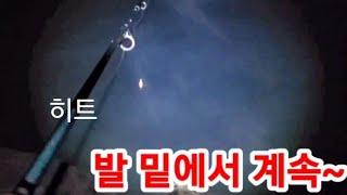 태안 천수만 수온 떨어 져도 미끼/수심/잘하면~ #바다…