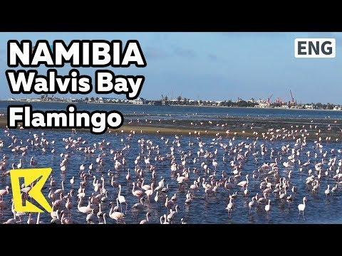 【K】Namibia Travel-Walvis Bay[나미비아 여행-월비스 베이]월비스 베이 홍학 떼Walvis Bay/Flamingo