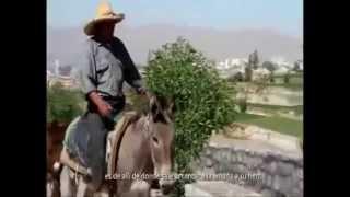 CHARANGO PERUANO - CHARANGO PAMPEÑO(AREQUIPEÑO)