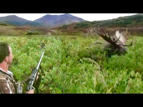 GIANT Alaskan Moose RUNS OVER Hunter!!!!! The Journey Part 2