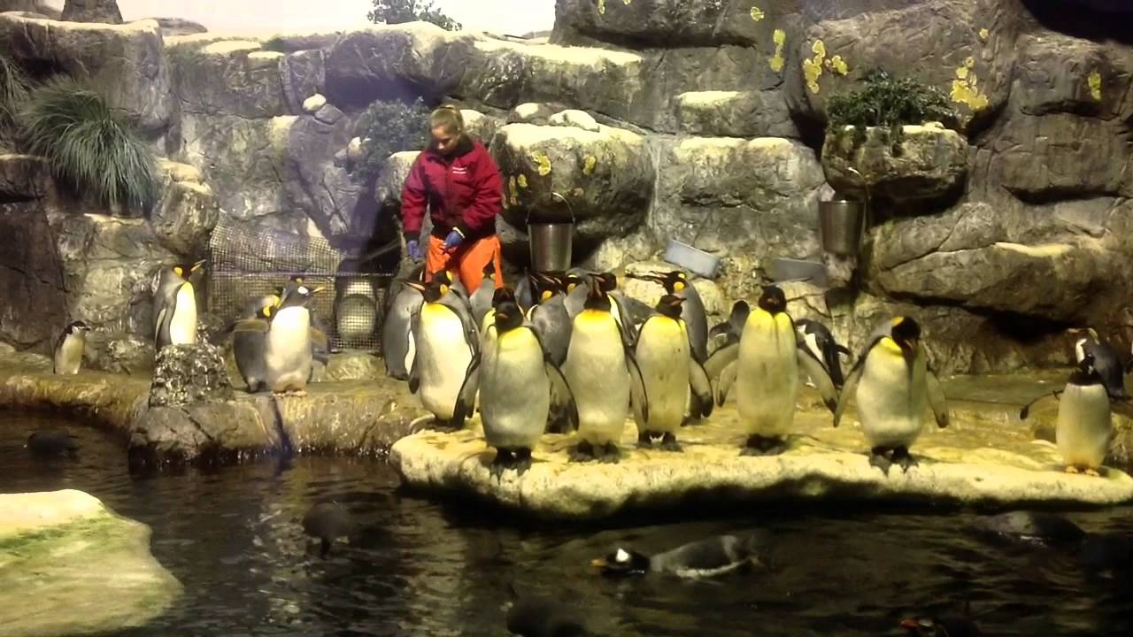 Janet Meets The Penguins Of Moody Gardens - YouTube
