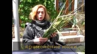 урок 4 создание титров  школа Алексея Радонец