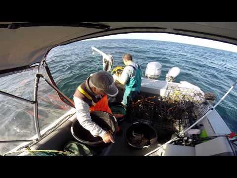 Hewescraft half moon bay crab limits 11 15 14 pot 6 of 7 for Half moon bay fishing report