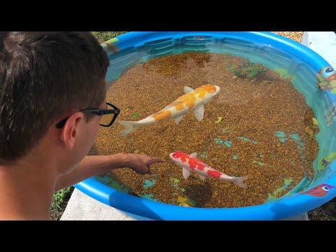 Mini POND Dead Fish!! NEW  FISH