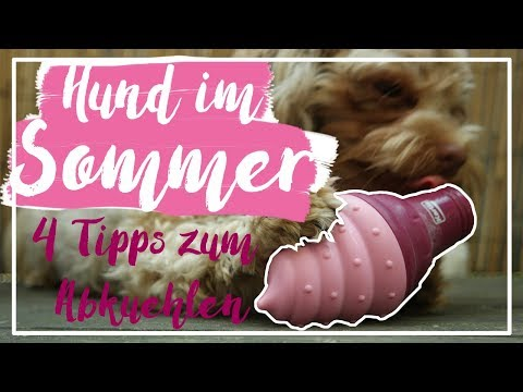 4 TIPPS, die deinen HUND im SOMMER ABKÜHLEN | Hitzeschlag vermeiden | Kascha! (P)