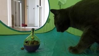 고야잉 최애간식 간식 장난감 놀이를 독차지하는 고양이