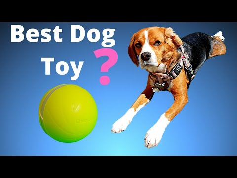 Cheerble Wicked Ball Automatic Pet Toy | Smart Interactive Pet Toy Ball - Watch Before You Buy