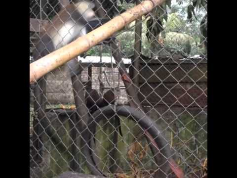 Host Country Day 1: Limbe Wildlife Centre in Southwest Cameroon
