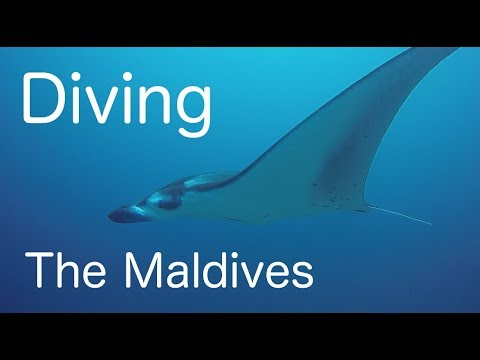 Diving the best of the Maldives 2017 HD - Plus Fish ID