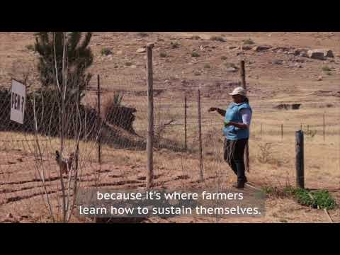 RSDA's chicken farm: an agri-business school for Lesotho's small-holder farmers