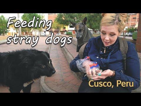 Feeding Stray Dogs in Cusco, Peru