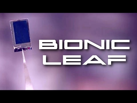 Great Invention: A 'Bionic Leaf' Could End Global Food Crisis 1