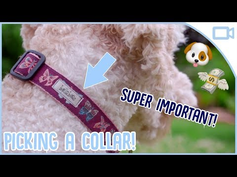 how-to-choose-the-right-collar-for-your-dog