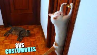 32 COSTUMBRES DE MIS GATOS