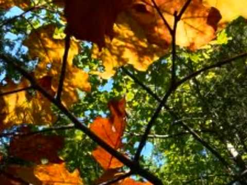 September Song - Willie Nelson