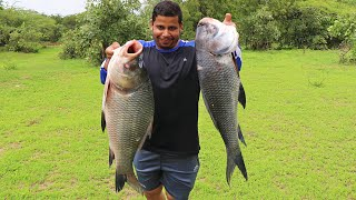 20 KG FISH CURRY IN THE JUNGLE FOR PEOPLE