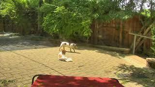 Outside Dog Yard Cam 06-12-2018 11:50:25 - 12:48:52