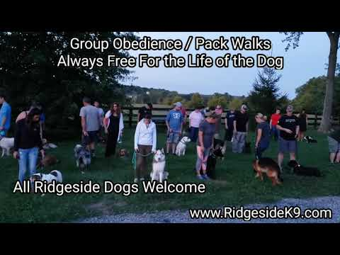 dog-group-obedience-training-and-pack-walk