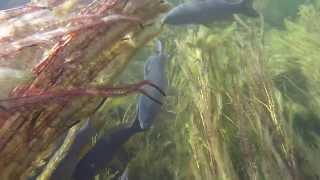 Подводная охота 3ч  2013г. videophoto.kz