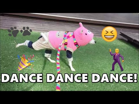HAPPY LOVES DANCING! CUTE RESCUE DOG DANCING! | HAPPY DOGGY HAPPY
