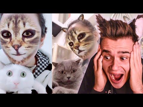 РЕАКЦИЯ КОШЕК И СОБАК НА КОШАЧЬЮ МАСКУ ����| Видео про котят и щенков | Самое милое видео в мире