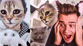 РЕАКЦИЯ КОШЕК И СОБАК НА КОШАЧЬЮ МАСКУ Видео про котят и щенков Самое милое видео в мире