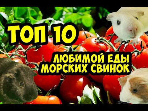 Морские свинки. Топ 10 любимой еды / SvinkiHotel