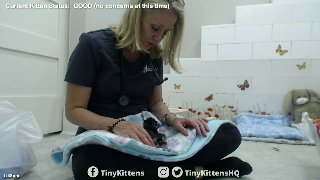Princess Consuela and kittens get vet check-ups!  TinyKittens.com