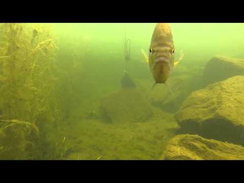 Underwater Gopro Experiment in Lake Champlain