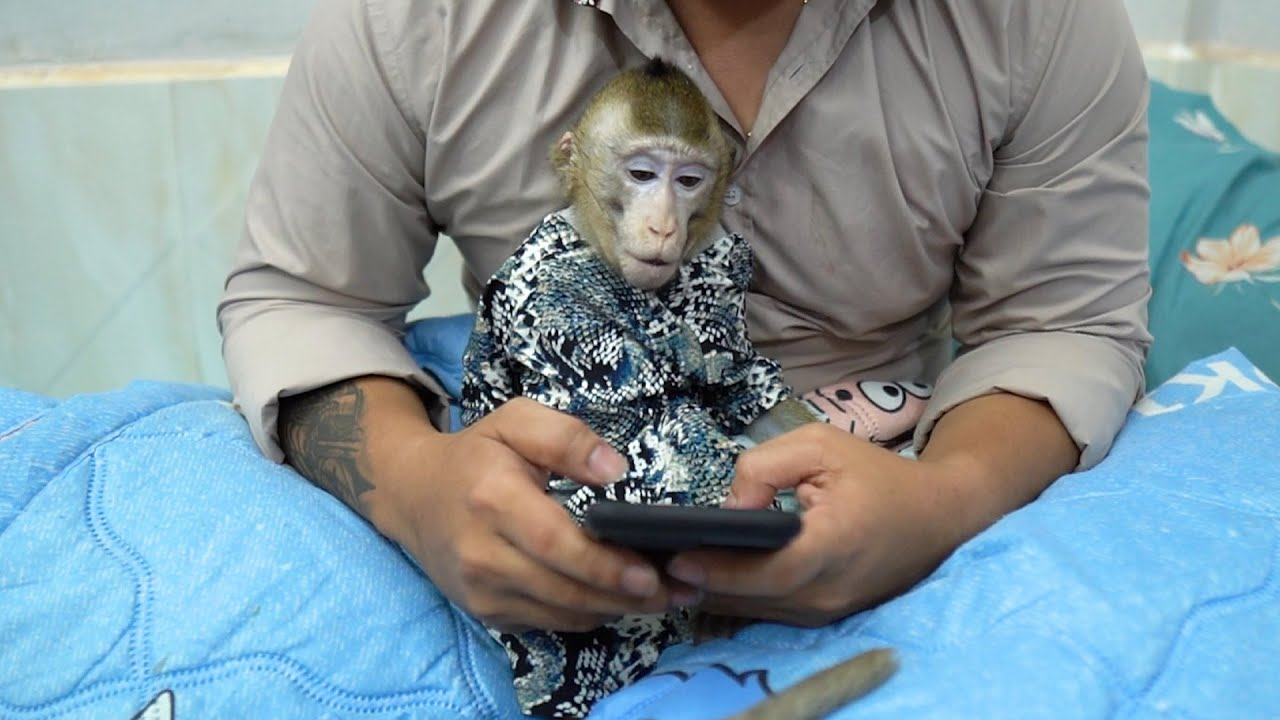 Oh ! Monkey Too so smart sit play phone with daddy.