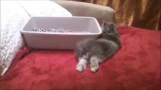 Litter Box Train And Become Friends With Your Bunny Rabbit At The Same Time