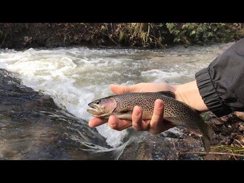 Westcoast Basstards Go Fishing In A Tiny Creek (Salem Oregon)