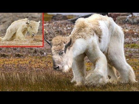 """سبحان الله حيوانات لم تكن تعرفها من قبل """" لن تصدق أنها موجودة """" .! thumbnail"""