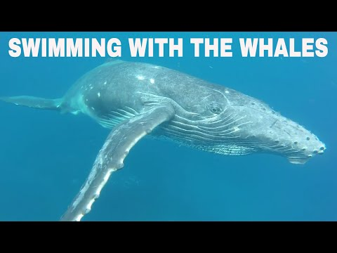 Whales of Tonga