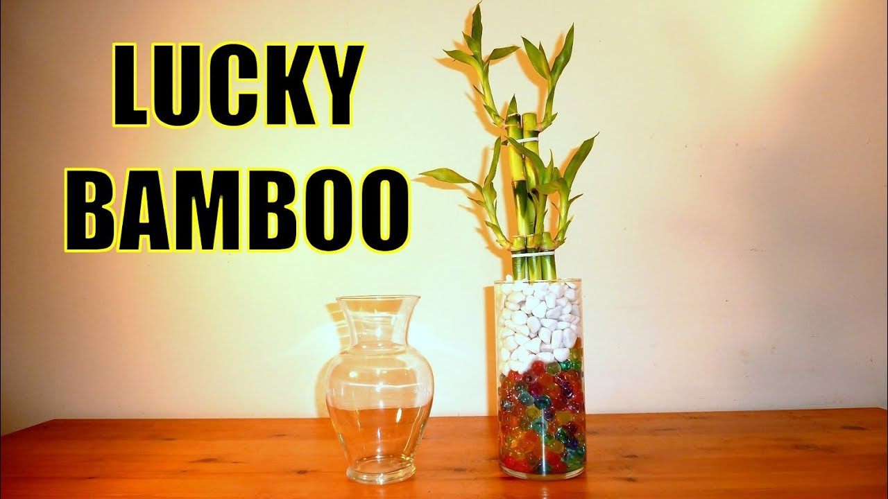 Lucky bamboo arrangements with crystal ball beads all you need lucky bamboo arrangements with crystal ball beads all you need to know about lucky bamboo youtube reviewsmspy