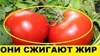 Домашнее похудение на помидорах, секреты томатной диеты