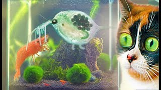UNDERWATER TERRARIUM, A BIG CHANGE!