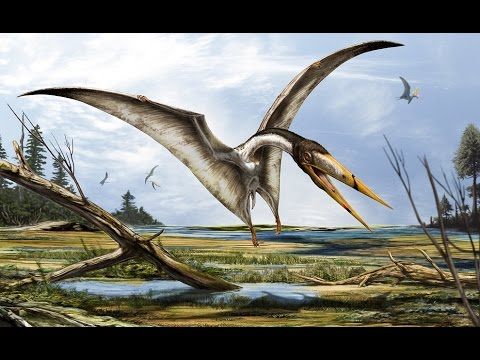 Top 10 Largest Pterosaurs