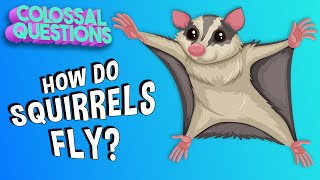 How Do Squirrels Fly? | COLOSSAL QUESTIONS