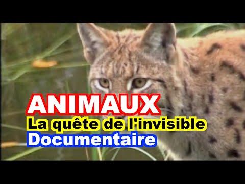 ETHOLOGIE : La quête de l'invisible - Le film.