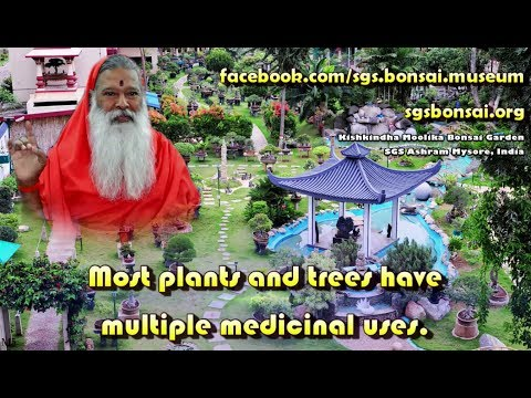 Kishkindha Moolika Bonsai Garden   SGS Ashram Mysore, India