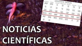 Descubierto pez trepa-cataratas | Noticias 21/3/2016