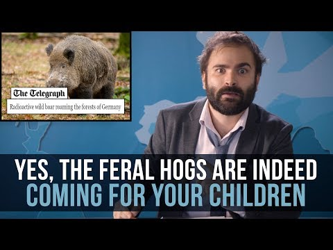 Yes, The Feral Hogs Are Indeed Coming For Your Children - SOME BOAR NEWS