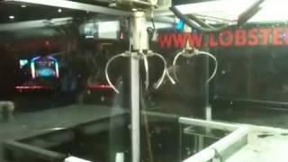 Lobster Claw Machine Win!!!