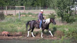 Colt Starting Training Under Saddle - First 20 Sessions - Circle D Ranch Llc Dallas Dfw Tx