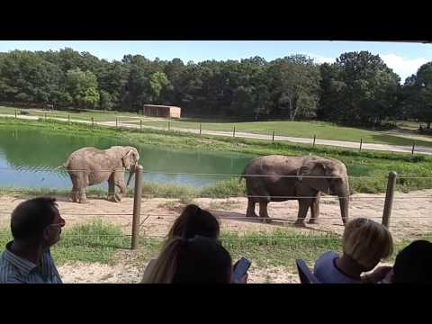 Safari Off Road Adventure part 1 at Six Flags Great Adventure in New Jersey