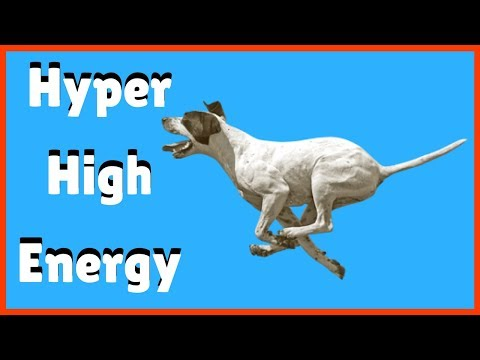 How to deal with hyper, high energy dog.