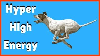 How To Calm My High Energy And Hyperactive Dog