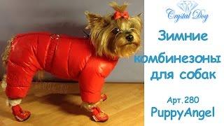 Комбинезоны для собак - Одежда для собак