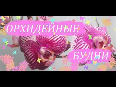 Орхидеи пересадили - какой грунт, как самочувствие новинок. АНОНС Орхидейных будней.
